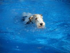 Jessy_swimming