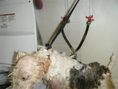 Babs getting a bath